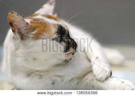gato animal felino naturaleza especie gris mate