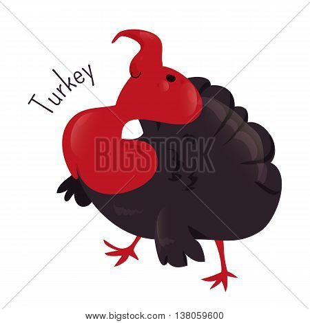 Turkey isolated on white. Large bird in genus Meleagris. Thanks giving day. Wild ocellated. Part of series of cartoon home animal species. Domestic pets. Sticker for kids. Child fun icon. Vector
