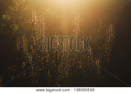 Grass At Sunset. Beautiful Retro Effect. Photo To Use Screensavers And Backgrounds.