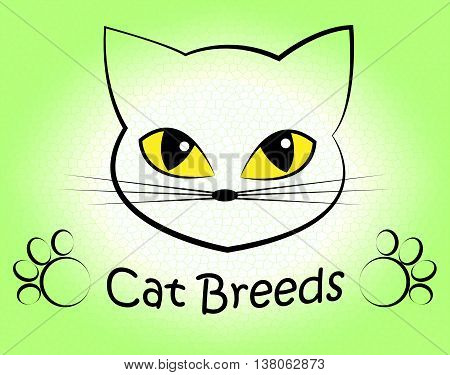 Cat Breeds Indicates Offspring Breeding And Bred