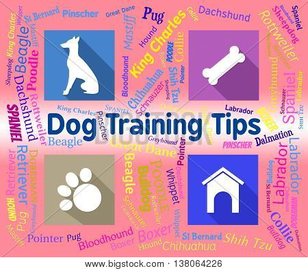 Dog Training Tips Means Coaching Instruction And Pets