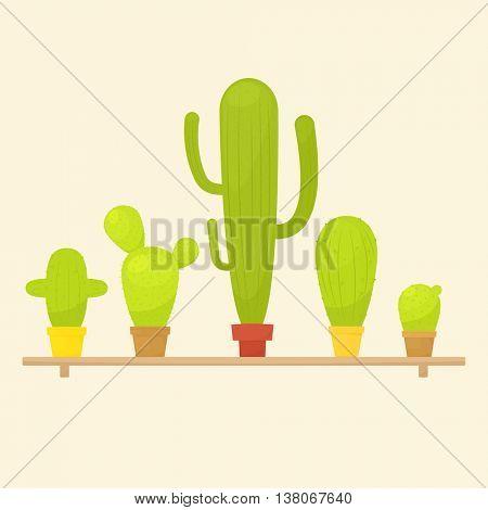 Cactus in pots on shelf