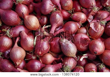 bunches of reddish purple shallots seen from above