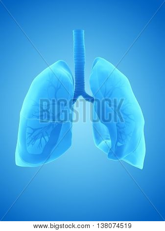3d rendered illustration of the human lung