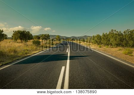 Road among olive trees in Greece
