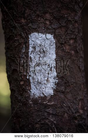 White Blaze on the Appalachian Trail Vertical with focus on center