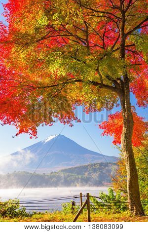 Mt. Fuji, Japan from Kawaguchi Lake in the autumn season.