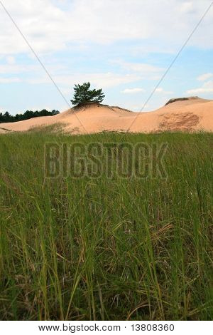 Grass and sand