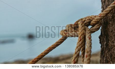 Rope tied up with a knot on a tree in front of ocean.