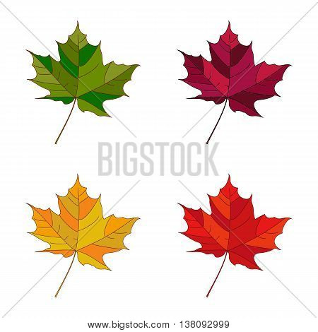 Vector autumn set leaves. Collection autumn leaves. Leafs set element floral color garden art. Fall leaf.