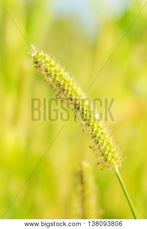 Close up on fresh green grass background