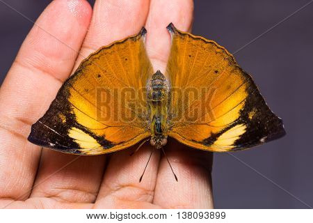 Autumn Leaf Butterfly