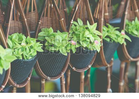 Little plant hanging in the flower pot for garden decoration.