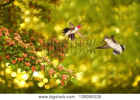 Hummingbirds over beautiful yellow and green summer background