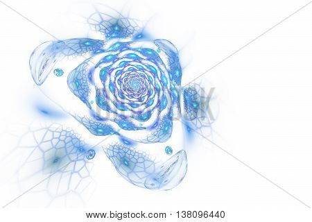 Abstract colorful rose flower on white background. Fantasy blue fractal design for postcards or t-shirts.