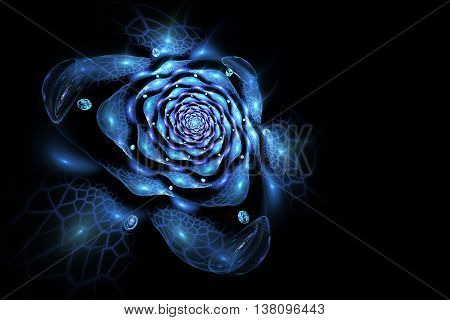 Abstract colorful rose flower on black background. Fantasy blue fractal design for postcards or t-shirts.