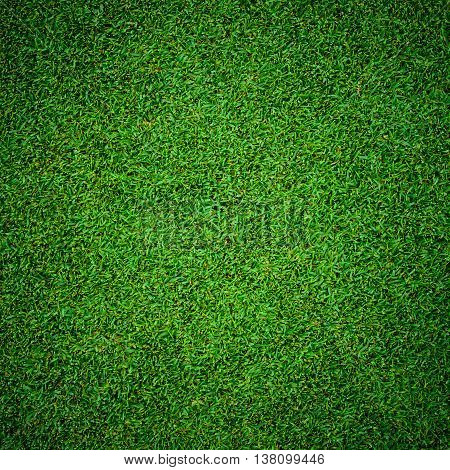 background of beautiful green grass pattern from golf course