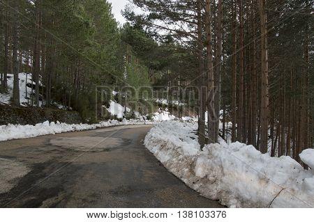 Road to the mountain in Soria, Castilla leon, Spain