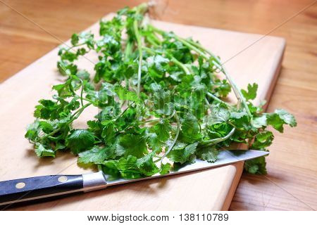 Organic fresh cilantro or coriander herb on a wooden chopping board with a knife. Shallow depth of field.