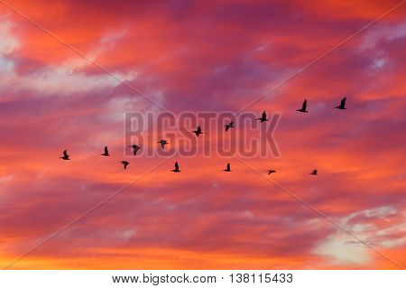 Sillhoutte of birds flying in formation with dramatic clouds at sunset