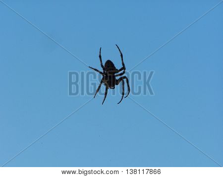 a  big spooky spider in an invisible web blue background