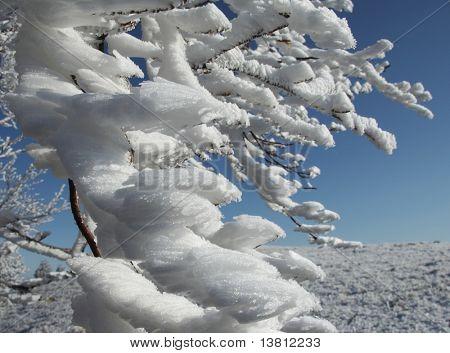 Frozen branch in winter forest