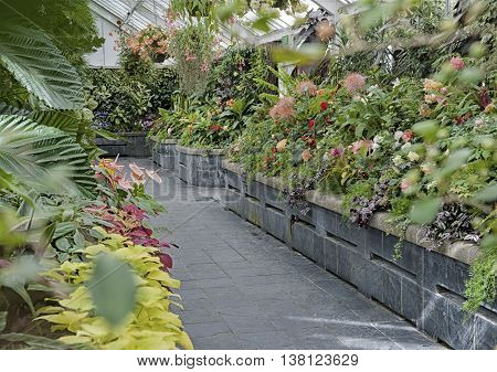Wellington New Zealand - March 2 2016: Begonia plants grown at Begonia House in Wellington New Zealand