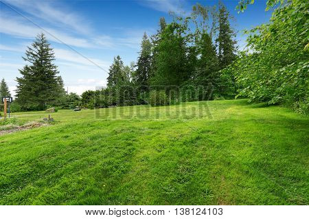 Farm House Backyard With Green Lawn, Fir Trees, Bushes