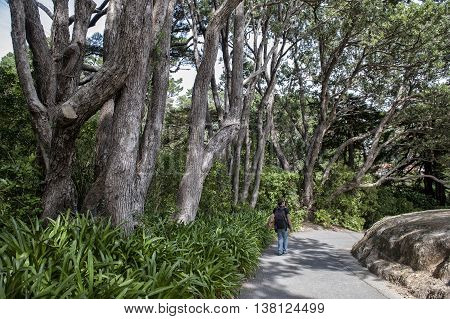 Visitor walking in Wellington Botanic Garden the largest public park in town