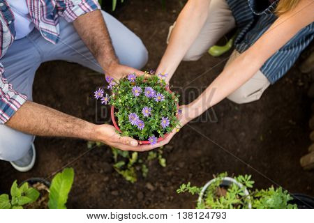 High angle view of male and female gardeners holding potted plants at botanical garden