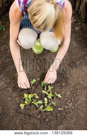 High angle view of female gardener planting at botanical garden