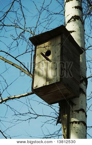 A birdhouse nestles among birch branch