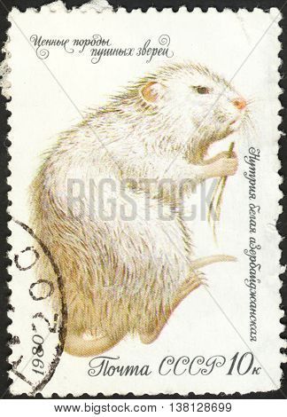 MOSCOW RUSSIA - DECEMBER 2015: a post stamp printed in the USSR shows an animal with the inscription