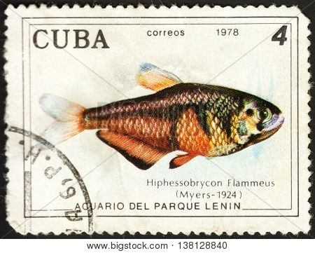 MOSCOW RUSSIA - DECEMBER 2015: a post stamp printed in CUBA shows a fish Hyphessobrycon flammeus the series
