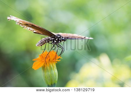 Colorful butterfly perched on a flower to eat.