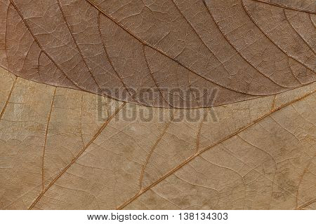 Texture of dry leaves close-up. Spring background