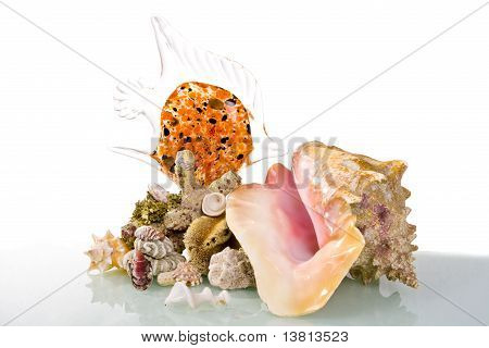 Big sea shell with glass fish and corals