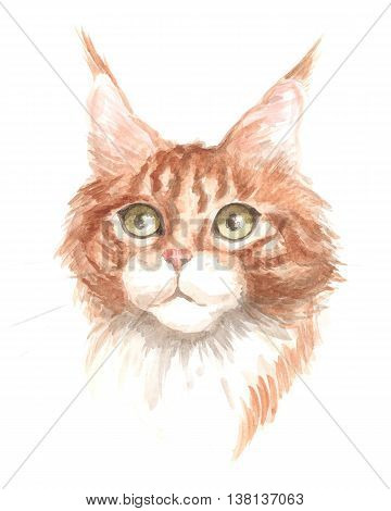 red maine coon. Image of a thoroughbred cat. Watercolor painting.