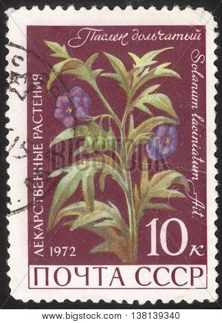 MOSCOW RUSSIA - DECEMBER 2015: a post stamp printed in the USSR shows a plant with the inscription