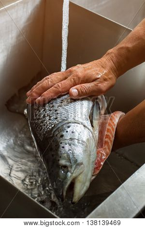 Male hands washing fish. Water flows onto big fish. First stage of cooking sushi. Fresh product of top quality.