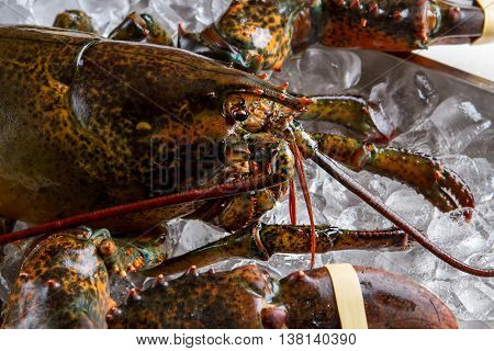 Head of lobster. Raw lobster and ice cubes. It's looking right at you. Animal world sends greetings.