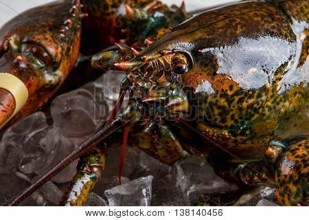 Eyes and mouth of lobster. Raw lobster lying on ice. Very convincing look. Fisherman's best catch.