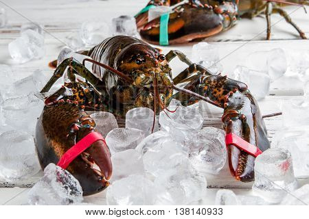 Raw lobsters with tied claws. Lobsters lying on ice cubes. Pick one of them. Delicacy from the ocean.