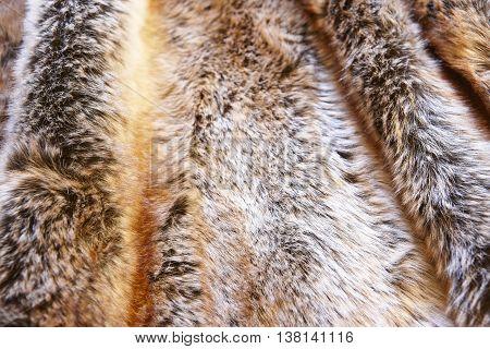 Natural fox furry background. Animal game. Horizontal