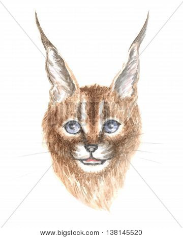 Image of a thoroughbred Caracal cat. Watercolor painting.