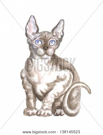 the sitting sphinx cat. Image of a thoroughbred cat. Watercolor painting.