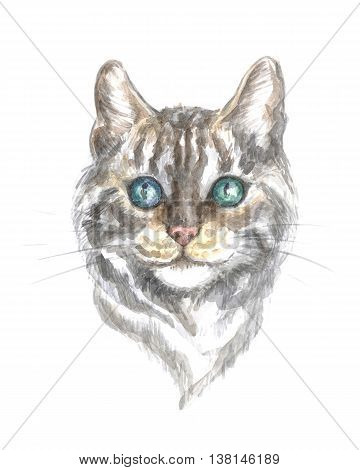 silver tabby bengal cat. Image of a thoroughbred cat. Watercolor painting.