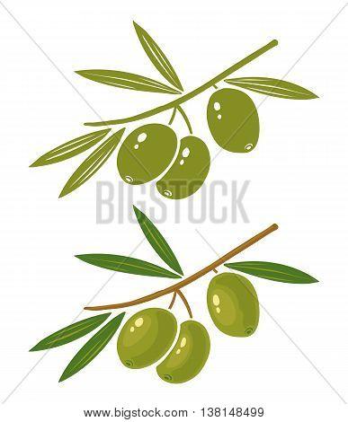 Set vector illustration green and black olives