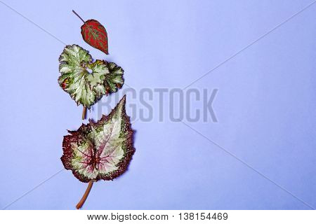 Different leaves on blue background