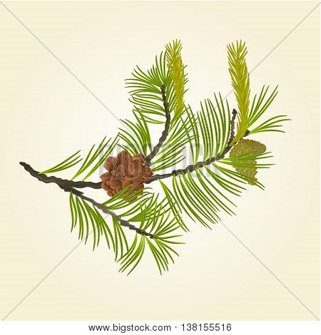 Blooming pine tree and pine cones branch natural background vector illustration